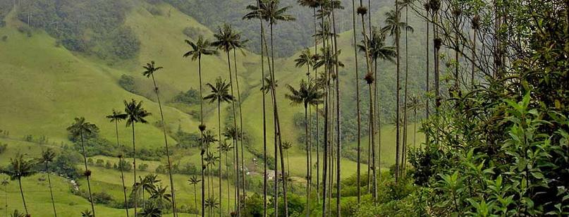 Долина Кокора: самые высокие пальмы в мире