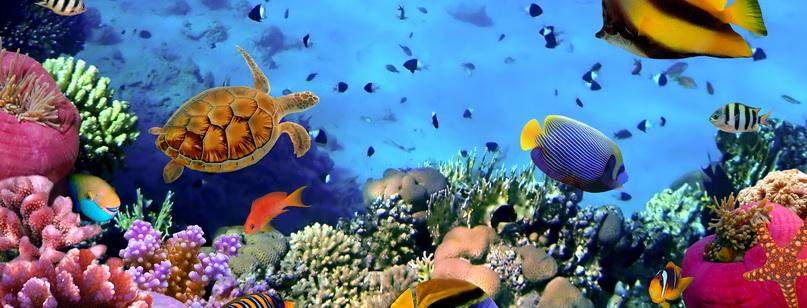 Красное море: фото