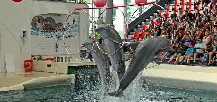 Дельфины аквариума в Варне